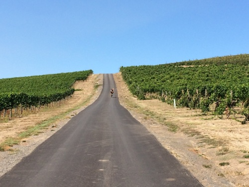 Yamhill Vineyards Hill-Climb