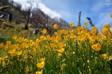 Wildflowers in TDP